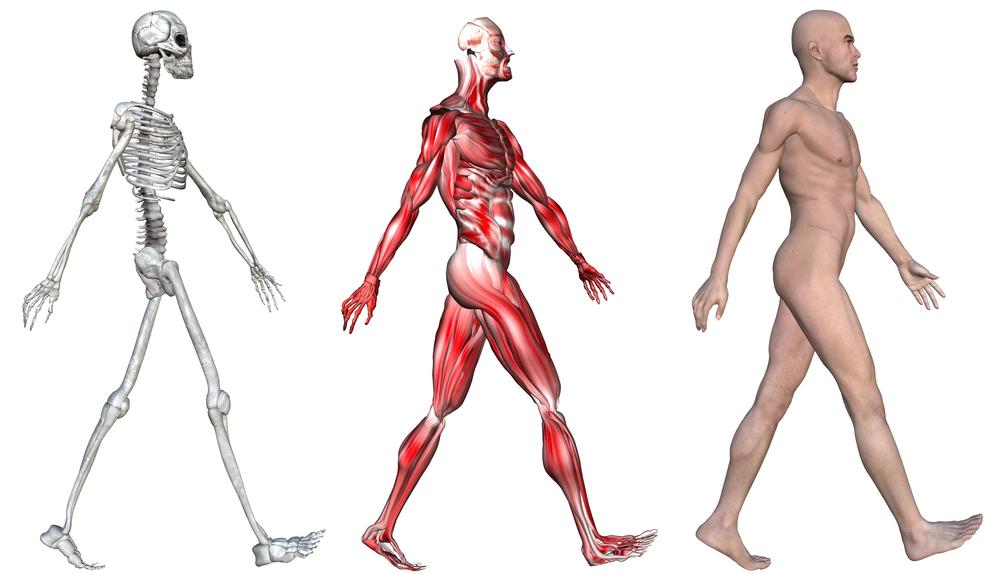 EFAA - Opleidingen - E-learning module Anatomie ...